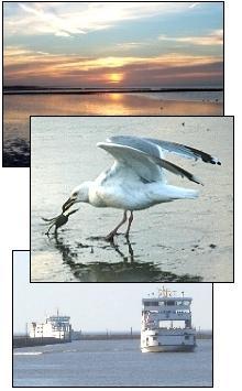 Das Wattenmeer mit den Gezeiten Ebbe und Flut, eine der vielen Seemöwen und die Fähren der Frisia. Direkt an der Norddeich Mole liegt der Hafen, von wo aus Sie die Inseln Norderney und Juist erreichen können...